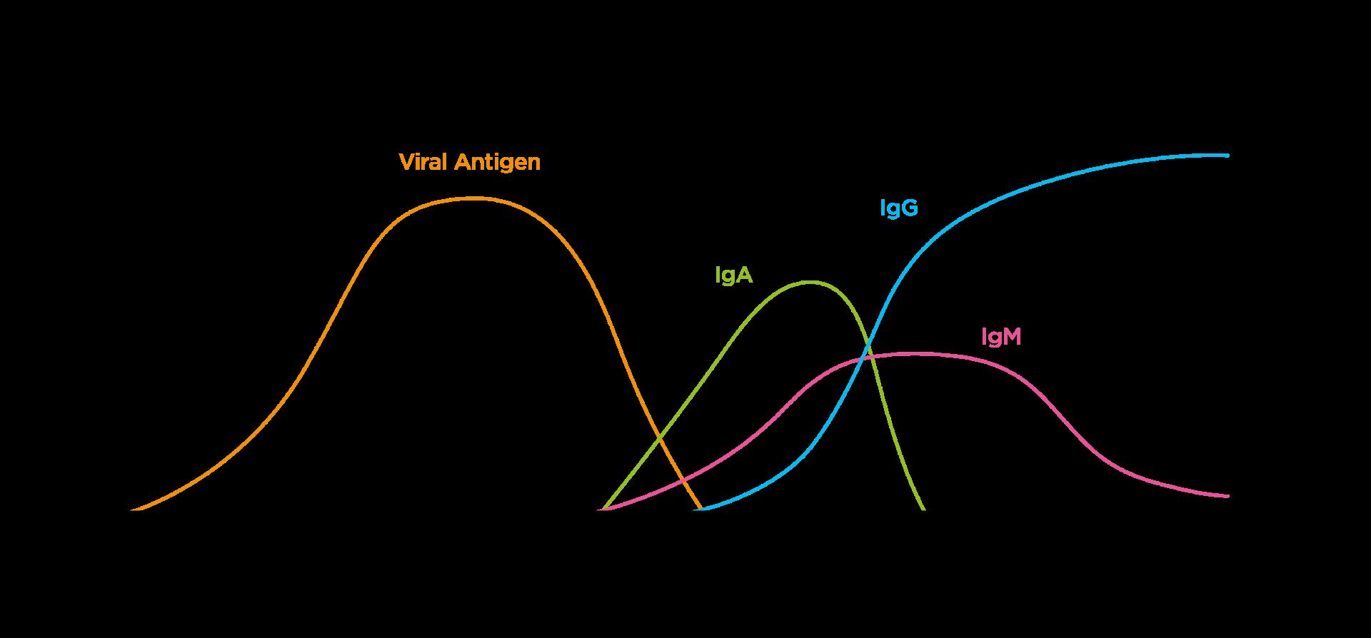 https://www.ibl-international.com/media/wysiwyg/products/db52181/SARS-CoV-2-RNA-Antigens-and-Antibody-Levels-graphic.png